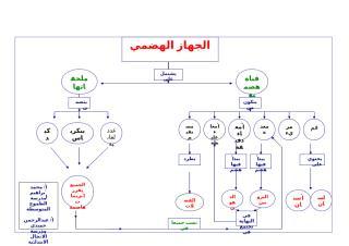 محمد إبراهيم و عبدالرحمن حميدي - الطموح و الانجال - علوم - خرائط.doc