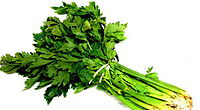 celery-some-healthy-foods-help-menstrual-cycle