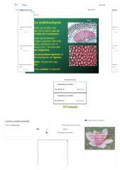 Licence professionnelle - ppt video online télécharger.pdf