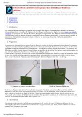 Observation au microscope optique des stomates de feuille de poireau.pdf
